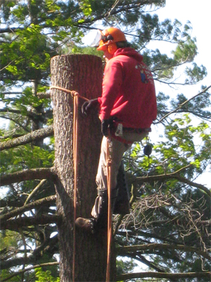 How to Find a Reputable Tree Surgeon