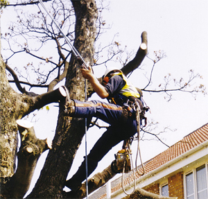 Tree Surgeon Equipment