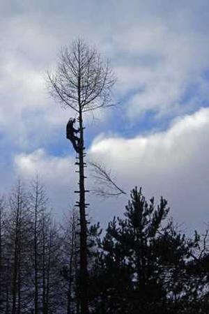 Tree Surgeons Inverness