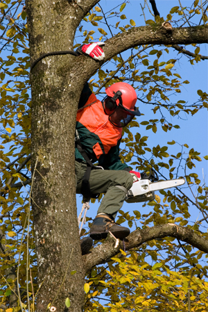 What is a Tree Surgeon