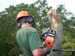 Why use a Tree Surgeon